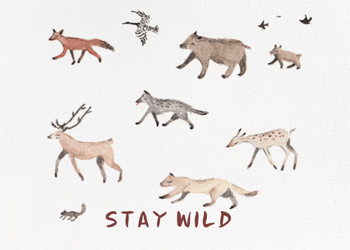 Stay Wild (Sarah Burwash) - Red Cap Cards