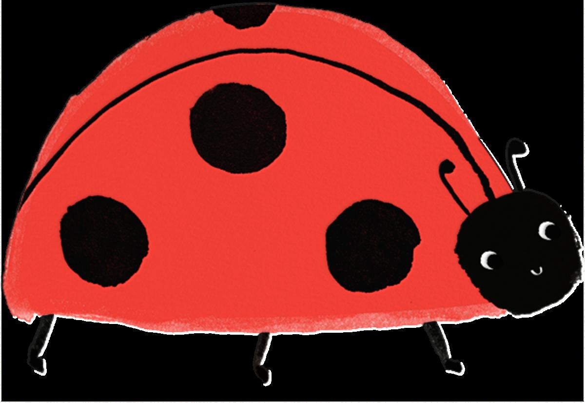 Ladybug Bash - Meri Meri - Kids' birthday